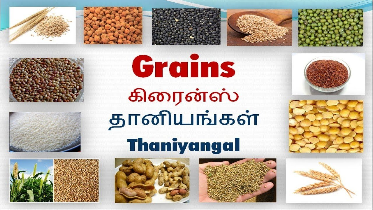 Vocabulary about Grains with pictures including Tamil meaning